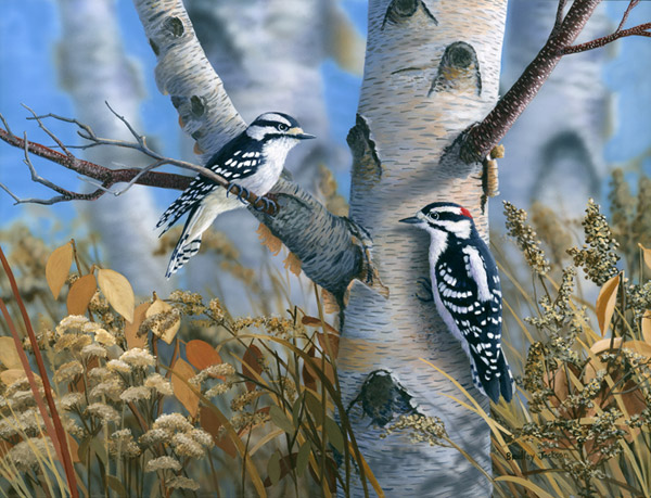 """Downy Woodpeckers"""