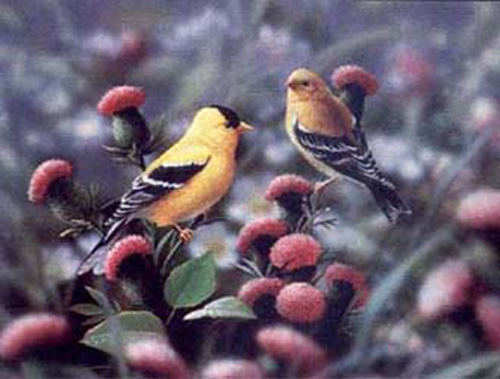 American Golfinches
